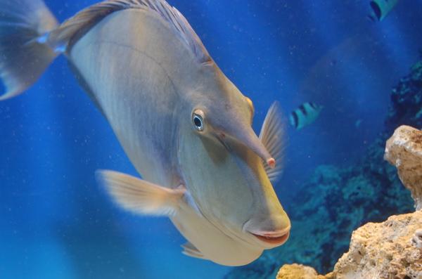 Kagoshima Japan The Age Of Aquariums The Silent I