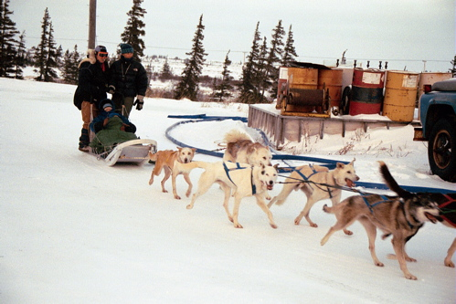 Dogsled_2