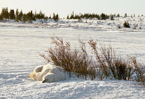 Sleeping_bear