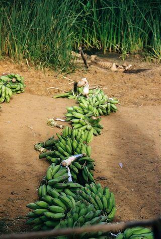 Easter Island Bananas