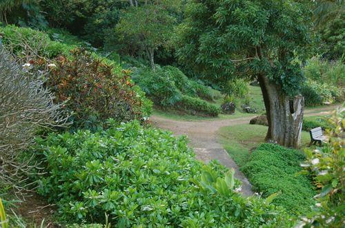 Limahuli path