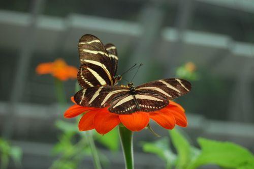 Cal Academy Butterflies