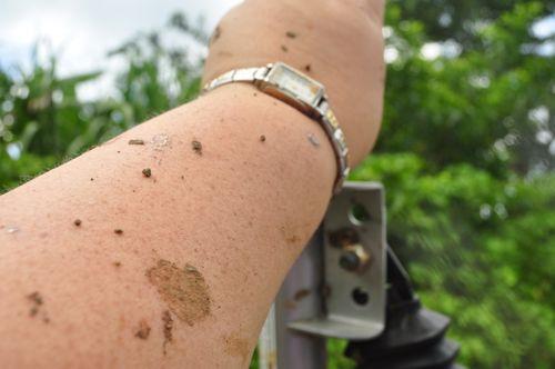 Jamaica Dirt