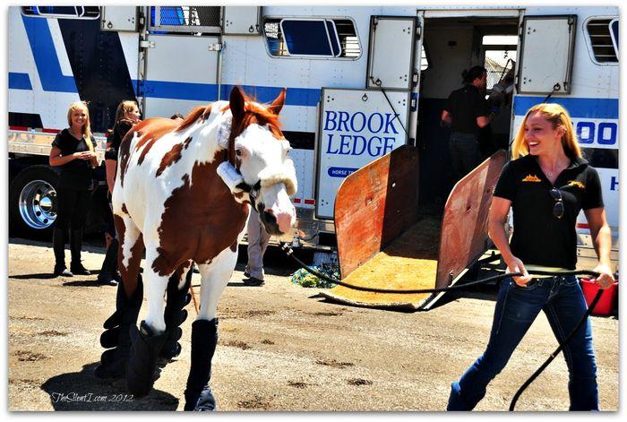 Cavalia Horse Arrival x