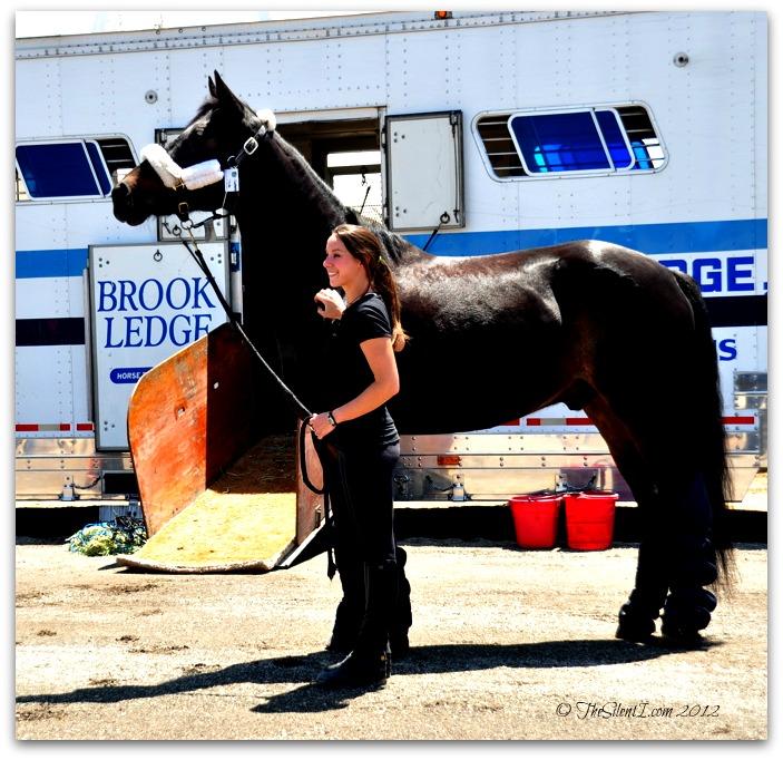 Cavalia Horse Stallion Arrival x