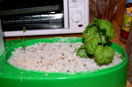 Hydro_grow_3